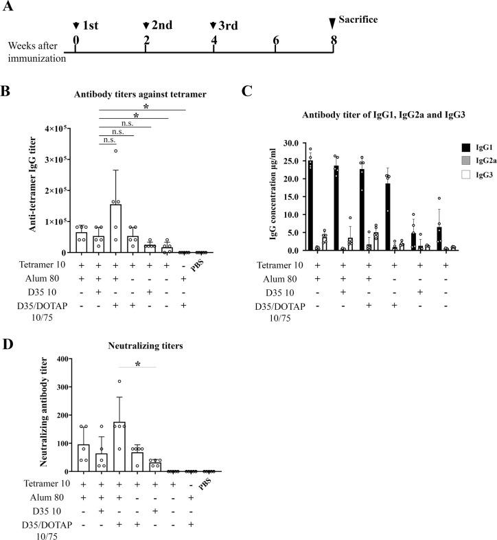 Humoral immunity induced by immunization with the tetramer and the combination of Alum and CpG adjuvant. (A) Immunization schedule indicated as the weeks of immunization of four-week-old female BALB/c mice (n = 5). ( B) The amounts of the anti-tetramer antibodies in the sera collected from mice immunized with the indicated combination of adjuvants at the eight weeks after the third immunization were evaluated for the further ELISA assay using purified tetramer. The titers were calculated as the maximum dilution at which the value of OD405 was higher than that of the mean+2SD of the group immunized with PBS. ( C) The IgG isotypes of the anti-tetramer antibodies were analyzed by the ELISA assay at the dilution of 2560. IgG1, 1gG2a and IgG3 were detected separately from the same sera. The values of serum estimated IgG concentration were obtained from standard curves for the isotype control antibodies of mouse IgG1, IgG2a and IgG3, and presented as the mean±SD. (D) The neutralizing activities of the sera from the immunized mice indicated were measured in MT4 cells. Titers are presented as the maximum dilution at which the HHV-6B IE1 protein could not be detected. Data are the mean±SD of each group. *p