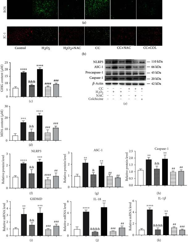 Colchicine plays an antipyroptosis role by inhibiting intracellular oxidative stress. HUVECs were subjected to H 2 O 2 (300 μ M), cholesterol crystal (0.5 mg/ml) and colchicine (10 nM), or N-acetyl-cysteine (NAC, 5 mM) for 10 h or 24 h. (a) ROS level was detected using a DCFH-DA probe, and (b) mitochondrial membrane potential was tested by <t>JC-1</t> (scale bars = 100 μ m). (c, d) The indicators of oxidative stress GSSG and MDA were tested by assay kits. (e) Western blotting was dedicated to examine the protein expression levels of NLRP3, ASC-1, procaspase-1, and caspase-1. (f–h) Quantitative analysis of pyroptosis-associated protein expression. (i, j) Real-time PCR analysis of the mRNA levels of GSDMD and proinflammatory cytokines (IL-18 and IL-1 β ). Data was expressed as the mean ± SD of three separate experiments. ∗∗ P