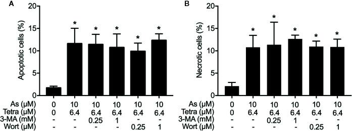 Effects of autophagy inhibitors on the induction of apoptosis and necrosis in MDA-MB-231 cells treated with the combination of As III and Tetra. After treatment with 10 μM As III +6.4 μM Tetra in the presence or absence of 3-MA (0.25, 1.0 mM) or wortmannin (0.25, 1.0 μM) for 48 h, cells were stained with annexin V-FITC and PI, and analyzed by flow cytometry. The percentages of apoptotic cells (A) and necrotic cells (B) were quantified by the same manner as described in the legend of Figures 2 and 3 . *p
