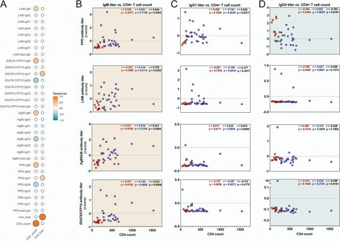 Antigen-specific IgM and IgG4 titers correlate with CD4 + T cell counts. (A) Spearman correlations across all HIV+ individuals comparing CD4 + T cell counts and viral loads to Z-scored antigen-specific isotype and subclass titers. Statistically significant correlations ( P