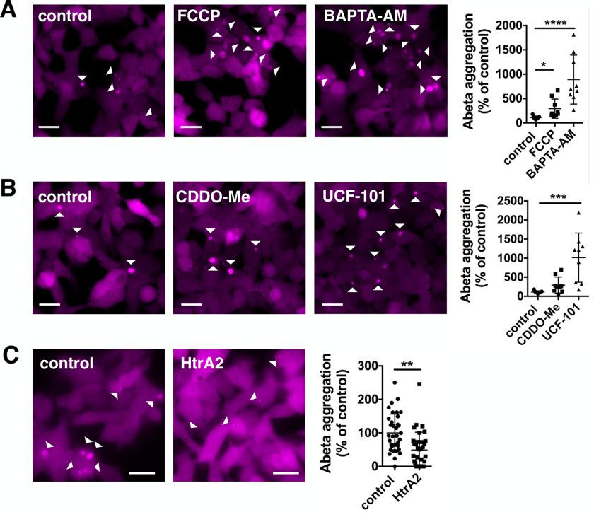 Mitochondrial proteostasis influences amyloid-β 1-42 pathology. A, Aβ42-mCherry overexpressing HEK cells were treated with DMSO (control), 1 μ m FCCP, or 10 μ m BAPTA-AM for 24 h. The aggregation of Aβ42 was increased upon treatment with FCCP and BAPTA-AM. Data are presented as mean ± S.D. *, p = 0.0298 and ****, p