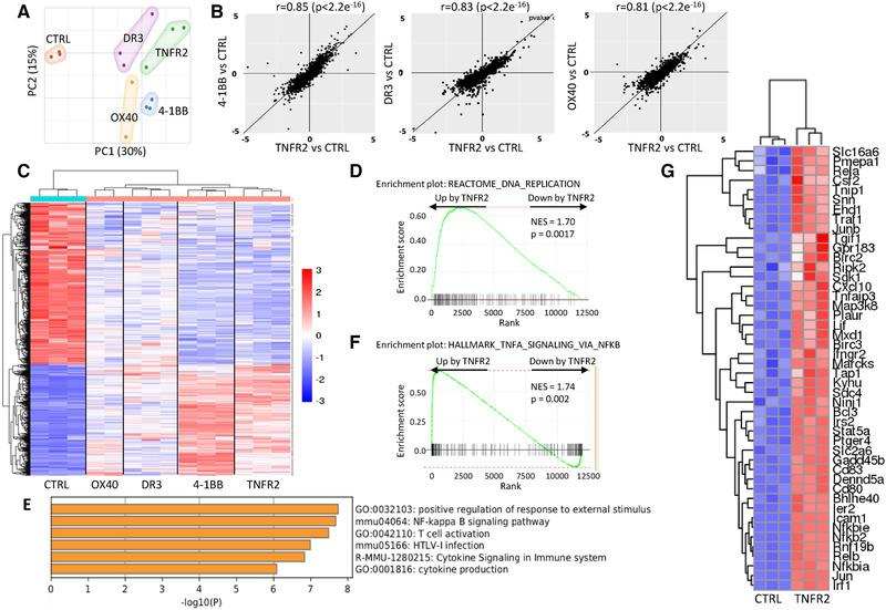 Different TNFRSF agonists induced a similar transcriptomic signature. RNA sequencing was performed on Tregs stimulated with <t>anti‐CD3/CD28</t> mAbs and agonists of TNFRSF for 18 h. Biological triplicates of one experiment is shown. (A) Principal component analysis. (B) FC/FC plots (expressed in log2) of differentially expressed genes (DEG) compared to controls (FDR