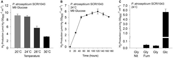 P. <t>atrosepticum</t> produces molecular hydrogen gas. A. Anaerobic hydrogen production is optimal at lower temperatures. The P. atrosepticum SCRI1043 parent strain was incubated in M9 medium supplemented with 0.8% (w/v) glucose for 168 h at the temperatures indicated before gaseous H 2 accumulation was quantified. B. A time course of H 2 accumulation. P. atrosepticum SCRI1043 was incubated in M9 medium supplemented with 0.8% (w/v) glucose at 24°C and gaseous H 2 accumulation was measured every 24 h. C. P. atrosepticum SCRI1043 was incubated in M9 medium supplemented with either 0.5% (v/v) glycerol and 0.4% (w/v) nitrate ('Gly Nit'); 0.5% (v/v) glycerol and 0.4% (w/v) fumarate ('Gly Fum'); 0.5% (v/v) glycerol only (Gly); or 0.8% (w/v) glucose only ('Glc') at 24°C for 48 h. In all cases, the levels of molecular H 2 in the culture headspace were quantified by GC and normalised to OD 600 and culture volume. Error bars represent SD ( n = 3).