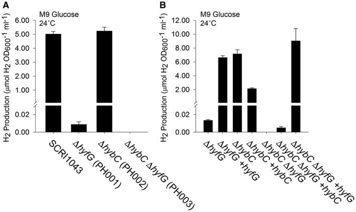 Hydrogen gas is produced by the activity of [NiFe]‐Hydrogenase‐4. A. Hyd‐4 is responsible for fermentative H 2 production. P. atrosepticum parental strain SCRI1043 and mutants PH001 (Δ hyfG ), PH002 (Δ hybC ) and PH003 (Δ hybC Δ hyfG ) were incubated in M9 medium supplemented with 0.8% (w/v) glucose at 24°C for 48 h. B. Complementation of the mutant phenotype in trans . Strains PH001 (Δ hyfG ), PH002 (Δ hybC ) and PH003 (Δ hybC Δ hyfG ) were separately transformed with plasmids encoding either HyfG or HybC under the control of constitutive promoters. Levels of molecular H 2 in the culture headspace were quantified by GC and normalised to OD 600 and culture volume. Error bars represent SD ( n = 3).