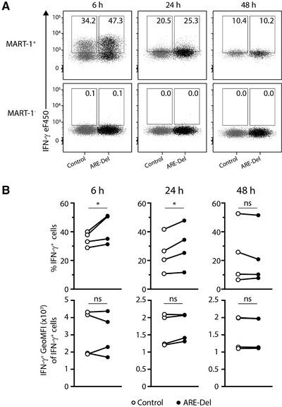 Enhanced IFN‐γ production by ARE‐Del T cells upon target cell recognition. MART‐1 TCR‐engineered T cells were co‐cultured with MART‐1 + and MART‐1 − cell lines expressing MART‐1 peptide for indicated time points. Brefeldin A was added 2 h prior to IFN‐γ production assessment. To define IFN‐γ producing T cells, MART‐1 TCR + T cells co‐cultured with MART‐1 − cells were used. Control T cells are depicted in gray, and ARE‐Del T cells are depicted in black. (A) Representative concatenated flow cytometry dot plots of IFN‐γ production of control and ARE‐Del T cells after 6, 24, and 48 h of co‐culture with MART‐1 + and MART‐1 − tumor cells. Separately measured samples containing control or ARE‐Del T cells were gated on live CD8 + T MART‐1 TCR + T cells (as depicted in Supporting Information Fig. 1B), exported and subsequently concatenated into one dot plot. IFN‐γ production is shown on the y ‐axis; samples are separated on the x ‐axis based on SampleID. Control T cells are depicted in gray, and ARE‐Del T cells are depicted in black. (B) Compiled flow cytometry data from n = 4 donors from three independent experiments (paired Student's t ‐test; * p