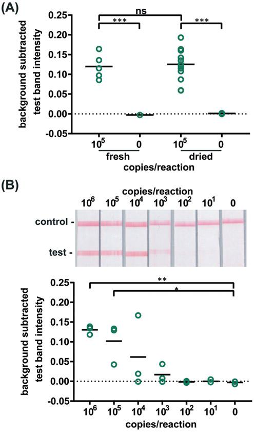 Detection of HIV virus amplified by dried RT-LAMP reagents. (A) There is no significant difference in test line intensity of labeled amplification products detected on LFIAs after amplification with fresh RT-LAMP reagents as with reagents dried for 21 days. n=5 (fresh), n=13 (dried), circles indicate replicates; *** indicates p ≤ 0.001 (B) Labeled RT-LAMP amplification products are visually detectable from as few as 1,000 HIV virus particles when reactions contain 16% serum. Electrophoresis gels verifying amplification (top, contrast increased for visualization), LFIA test results (middle), and LFIA test line quantification (bottom). n=3, circles indicate replicates; ** indicates p ≤ 0.01; * indicates p ≤ 0.05.