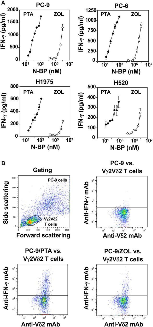 Comparison of PTA and ZOL in the induction of IFN-γ from Vγ2Vδ2 T cells. (A) Determination of IFN-γ produced by Vγ2Vδ2 T cells in response to lung cancer cell lines pulsed with PTA or ZOL. Human lung cancer cells, PC-9, PC-6, H1975, and H520 (4 × 10 5 cells), pretreated with PTA (•) at concentrations of 15.625, 31.25, 62.5, 125, 250, 500, or 1,000 nM, or ZOL (⚬) at concentrations of 7.8125, 15.625, 31.25, 62.5, 125, 250, 500, or 1,000 μM were challenged by PTA-expanded Vγ2Vδ2 T cells (4 × 10 5 cells). After incubation for 16 h, the culture supernatants were examined for IFN-γ levels through ELISA. (B) Intracellular staining of IFN-γ in Vγ2Vδ2 T cells in response to human lung cancer cells pretreated with PTA or ZOL. PC-9 human lung cancer cells (1 × 10 6 cells/ml) were treated with 1 ml of the complete RPMI1640 medium or the medium containing 1 μM PTA or with 1 mM ZOL at 37°C with 5% CO 2 for 2 h. Then, the cells were examined for intracellular IFN-γ using a FACSCalibur flow cytometer and the cell population was visualized using FlowJo ver. 10.