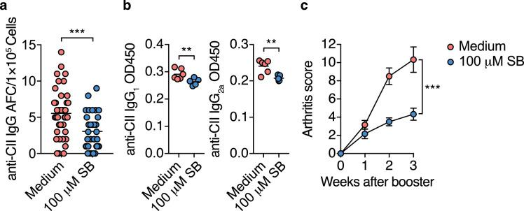 iT FR  cells prevent autoimmune responses and CIA development (a, b) CII-specific IgG responses in CIA mice inoculated with Foxp3-hCD2 +  cells cultured under iT FR -cell conditions in the absence or presence of 100µM SB. Sort-purified 5×10 6  of Foxp3-hCD2 + CD4 + T  cells were injected intravenously into DBA/1J mice one week before the initial CII immunization.All mice were fed the control HAMS diet ( n =10, 11). The number of CII-specific IgG AFC cells per 1×10 5  DLN cells (a, each dot indicates data from 1 well,  n =44, 32, statistical analysis was performed on the mean of each mouse.), and serum levels of CII-specific IgG 1  and IgG 2a  three weeks after booster immunization (b,  n =5, 6). (c) Arthritis scores after booster immunization of CIA mice inoculated with Foxp3-hCD2 +  cells from iT FR  cell culture ( n =10, 11). AUC was calculated in each mice. Results show one representative experiment of at least two experiments.** P