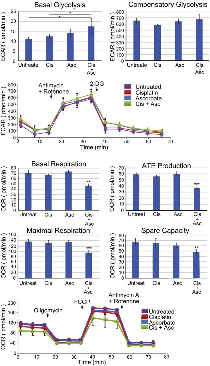 Ascorbate and cisplatin treatment alter mitochondrial respiration and glucose metabolism of U2OS cells. A, U2OS cells (1 × 10 4 cells) were treated with cisplatin (10 µmol/L), ascorbate (10 µmol/L), or cisplatin plus ascorbate for 96 h and the glycolytic functions (basal and compensatory glycolysis) were measured by a flux analyzer. Kinetics of the ECAR response of U2OS cells to ROT/AA (0.5 µmol/L) or 2‐DG (50 mmol/L) was measured by a flux analyzer. B, U2OS cells (1 × 10 4 cells) were treated with cisplatin (10 µmol/L), ascorbate (10 µmol/L), or both for 96 h and the mitochondrial functions (basal respiration, ATP production, maximal respiration, and spare capacity) were measured by a flux analyzer. Kinetics of the OCR response of U2OS cells to oligomycin (1.0 µmol/L), FCCP (1.0 µmol/L), or ROT/AA (0.5 µmol/L) was measured by a flux analyzer. The data represent the mean ± SD of triplicate samples from three independent experiments. * P