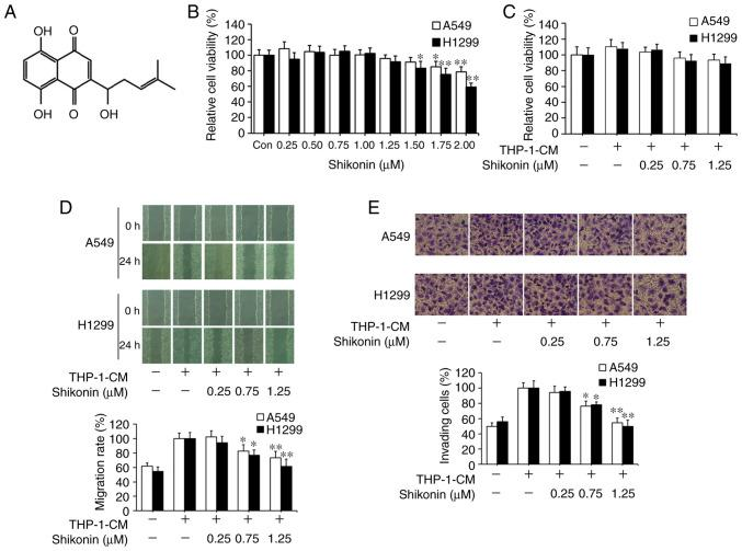 Inhibitory effects of shikonin on THP-1-CM-induced migration and invasion of A549 and H1299 cells. (A) Chemical structure of shikonin. (B) Effect of shikonin on the viability of lung adenocarcinoma cells. A549 and H1299 cells were treated with serial doses of shikonin in normal medium for 24 h, and the viability of cells was detected by CCK-8 assay. (C) A549 and H1299 cells were incubated with THP-1-CM and/or shikonin for 24 h, and the viability of cells was examined by CCK-8 assay. (D) Wound healing assays. A549 and H1299 cells were scratched and incubated with THP-1-CM and/or shikonin, and images were captured at 0 and 24 h after wounding. (E) Invasion assays were performed by Transwells covered with Matrigel. After treatment with THP-1-CM and/or shikonin for 24 h, the cell suspensions were subjected to Transwell assays. Images (magnification ×200) are representative of three independent experiments. Data are shown as the mean ± SD of three independent experiments. *P