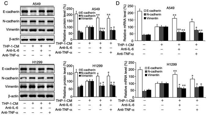 Effect of IL-6 and TNF-α on the migration and epithelial-mesenchymal transition (EMT) of A549 and H1299 cells. (A) IL-6 and TNF-α secreted into the culture supernatants were measured using ELISA kits after treatment with LPS and anti-IL-6 or anti-TNF-α antibodies for 24 h in THP-1-CM. **P