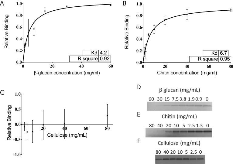 The interaction between NaD1 and β-glucan, chitin and cellulose. Binding of NaD1 to insoluble carbohydrates was assessed by solution depletion assays and SDS-PAGE analysis of supernatant. Binding isotherms for NaD1 binding to β-glucan (A), chitin (B) and cellulose (C) were generated from densitometry on three replicates of the SDS-PAGE analysis of supernatants from the defensin depletion assays. Gels were stained with RAPID stain. Representative gels are presented for β-glucan (D), chitin (E) and cellulose (F). The dissociation constants for each pair were calculated using a non-linear regression with a one site binding model. NaD1 binds chitin with a Kd of 6.7 ± 2.4 mg/mL and β glucan with a Kd of 4.2 ± 0.8 mg/mL which when calculated with respect to the molar concentration of each monosaccharide are 33.0 ± 11.8 mM and 25.9 ± 5.0 mM respectively. NaD1 did not bind to cellulose. Data is the average of 3 independent experiments. Error bars are standard deviation.