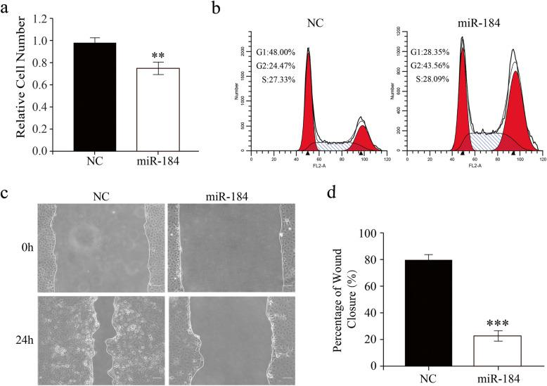 Ectopic miR-184 transfection suppresses human corneal epithelial cell (HCEC) proliferation and migration. a. MTS cell proliferation assay was performed at 48 h after transfection with either a miR-184 mimic or negative control (NC). The miR-184 transfected cell number was significantly decreased as compared with the NC ( n = 3/group). b. G2/M phase arrest in the HCEC cell cycle was induced by ectopic miR-184 transfection. HCECs gathered at 48 h after transfection were then stained with PI and analyzed with flow cytometry. c. miR-184 transfection reduced HCEC migration. HCECs were transfected with miR-184 or NC for 24 h, and scratches were then made in the HCEC cultures to perform the wound-healing assay. Following culturing for either 0 or 24 h in serum-free <t>DMEM/F12,</t> representative photos of the scratched regions were taken by phase-contrast microscopy. d. The percentage of wound closure (%) was quantified by normalizing the healing area to the initial wound area ( n = 3/group)