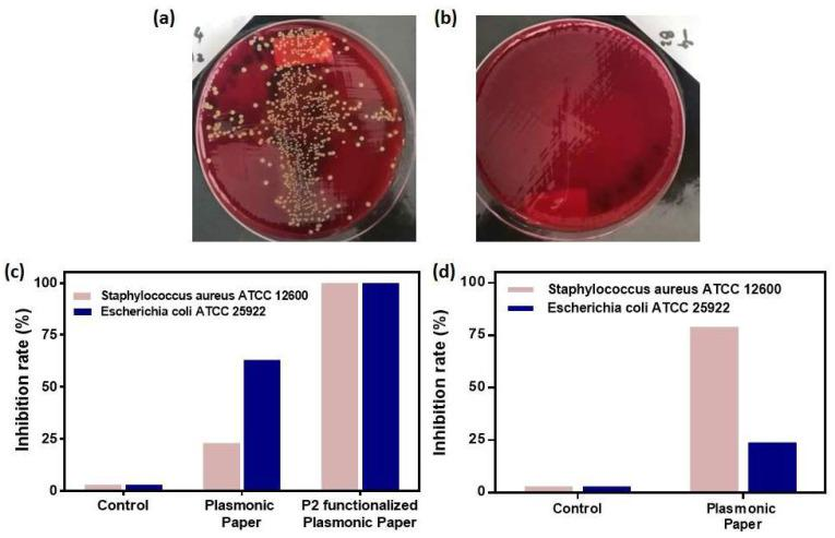 Representative digital images of the colony counting plates with Staphylococcus aureus ATCC 12600 showing the anti-microbial activity against planktonic bacteria without ( a ) and with the P2-functionalized plasmonic paper ( b ); The bacterial growth inhibition rates for ( c ) planktonic bacteria and ( d ) bacterial biofilm determined for the as-designed paper-based nanoplatform when applied to both Staphylococcus aureus ATCC 12600 and <t>Escherichia</t> coli ATCC 25922 bacterial cultures.