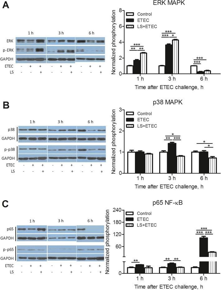 Activation of MAPK and NF-κB pathways in ETEC K88-stimulated IPEC-J2 cells. IPEC-J2 cells harvested from L. salivarius involvement groups and control ones were treated with ETEC K88, and cell lysates were subjected to Western blotting with phosphor-specific Abs against ( a ) p-ERK, ( b ) p-p38 and ( c ) p-p65. GAPDH was used as the loading control. Data are presented as means ± SEM of three independent experiments. *, P