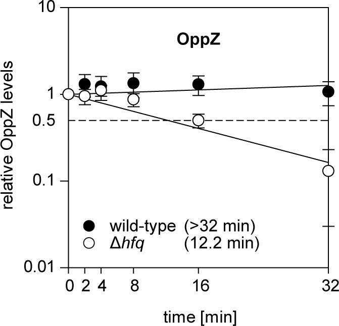 Hfq dependence of OppZ stability. V. cholerae wild-type and Δ hfq strains were grown to early stationary phase (OD 600 of 1.5) and treated with rifampicin to terminate transcription. RNA samples were obtained at the indicated time points and OppZ transcript levels were monitored by Northern blot and normalized to 5S rRNA levels as loading control. Error bars represent the SD of three biological replicates. Quantification of OppZ levels in wild-type and Δhfq cells from Northern blots.
