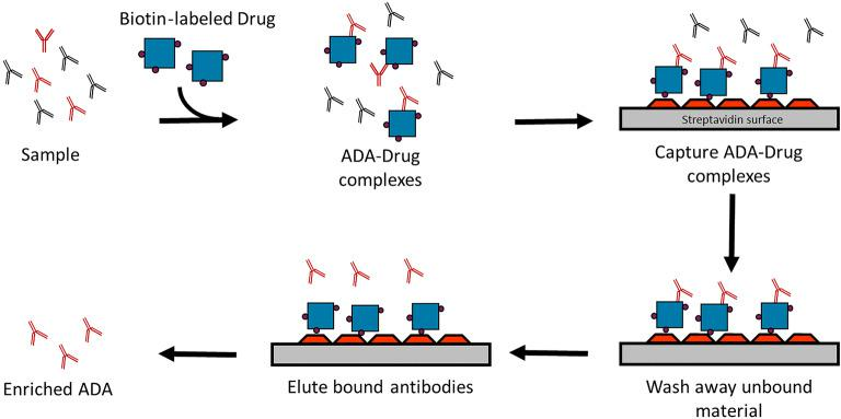 Enrichment of anti-Humira® reactive antibodies from samples. The figure shows use of biotin-labeled Humira® to capture Humira® reactive ADA from the sample in solution. The ADA biotin-Humira® complexes were then captured on streptavidin-coated plates, washed, and the ADA released into solution using 100 mM acetic acid. The ADA enriched sample was neutralized with 150 mM Tris buffer and analyzed in the multiplexed assay