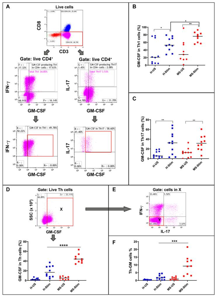 Granulocyte macrophage colony stimulating factor (GM-CSF) expression in Th1, Th17, Th, and Th-GM cells: Frozen isolated peripheral blood mononuclear cells (PBMC) were thawed and stimulated with anti-CD3/anti-CD28 for 5 days and restimulated with phorbol myristate acetate (PMA)/ionomycin (I) in the presence of brefeldin A for the last 5 h. ( A ) Live CD4 + cells were gated for Th1 (middle left panel) and Th17 expression (middle right panel). Then, the corresponding percentage of GM-CSF-producing cells were evaluated (bottom panels). ( B ) Global analysis of Th1 GM-CSF-producing cells, both in unstimulated and stimulated healthy control and multiple sclerosis (MS) samples: The paired unstimuated/stimulated (US/S)data for each sample are shown in Figure S1 . ( C ) Global analysis of Th17 GM-CSF-producing cells, both in unstimulated and stimulated HC and MS samples. ( D ) Live CD4 + (Th) were gated for GM-CSF expression (top panel, population X) and analysed both in unstimulated and stimulated HC and MS samples (lower panel). ( E ) Population X gated cells were used to identify double negatives for IL17 and IFN-γ (population Y). ( F ) Global analysis of non-Th1, non-Th17 Th cells expressing GM-CSF (Th-GM), both in unstimulated and stimulated HC and MS samples, was done using the equation Th-GM (%) = X × Y × 100% (where X and Y are expressed as decimal values). H-US: unstimulated cells from healthy controls; H-Stim: stimulated cells from healthy controls; MS-US: unstimulated cells from MS patients; MS-Stim: stimulated cells from MS patients; and SSC: side scattered. Horizontal lines are medians. * p