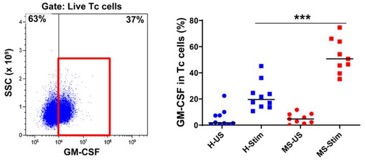 GM-CSF expression in cytotoxic T (Tc) cells: Fresh isolated PBMC were stimulated with anti-CD3/anti-CD28 for 5 days and restimulated with PMA/I in the presence of brefeldin A during the last 5 h. The left panel shows a representative flow cytometry plot analysis in which cells were gated for live Tc cells (full details on the gating strategy can be found in Figure S2 ). Then, the percentage of GM-CSF-producing cells was counted, and the collective results in healthy controls (H) and MS patients are shown (right panel). US: unstimulated cells; Stim: stimulated. Horizontal lines are medians. *** p