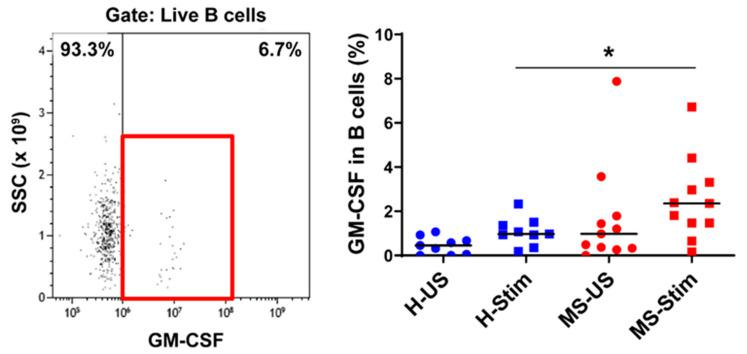 GM-CSF expression in B cells: Frozen isolated PBMC were thawed and stimulated with anti-CD3/anti-CD28 for 5 days and restimulated with PMA/I in the presence of brefeldin A during the last 5 h. The left panel shows a representative flow cytometry analysis in which cells were gated for live B cells (full details on gating in Figure S2 ). Then, the percentage of GM-CSF-producing cells was counted, and the collective results in healthy controls (H) and MS patients are shown (right panel). US: unstimulated cells; Stim: stimulated cells. Horizontal lines are medians. * p