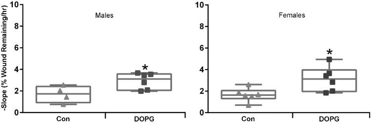 The ability of DOPG to enhance corneal epithelial wound healing is not affected by the sex of the animal. Male and female AQP3 knockout mice treated as in Figure 6 were analyzed separately (n = 4–6). Regression slopes (the healing rate) were compared by an unpaired Student's t -test and illustrated as values for individual animals by sex as indicated ( * P