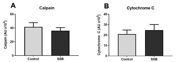 The effect of SSB consumption on calpain and <t>cytochrome</t> c expression. ( A ) Calpain and ( B ) cytochrome c levels. Data are displayed as mean ± SEM ( n = 8).