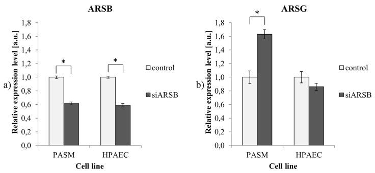 Expression of ARSB and ARSG. ( a ) The efficiency of ARSB gene silencing in PASM and HPAEC cells using siRNA; ( b ) expression of ARSG transcript in PASM and HPAEC cells with a depleted ARSB gene. Results are shown as mean ± SD from three biological experiments. *—statistically significant changes (compared to controls treated with non-targeting siRNA; p -value