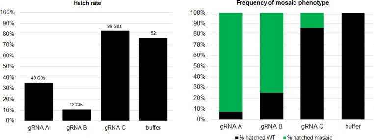 Somatic mosaicism and hatch rate varied after CRISPR/Cas9 embryonic injection with different guide RNAs. (A) Hatch rate of embryos injected with gRNAs (A–C) compared to those injected with buffer. (B) Frequency of mosaic pigmentation phenotype in G0s. Embryos injected with gRNAs A or B clearly showed much higher rates of mosaicism than embryos injected with gRNA-C. CRISPR, clustered regularly interspaced short palindromic repeats; gRNA, guide RNA; WT, wild-type.