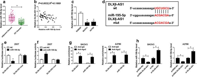 MiR-195-5p was a target of DLX6-AS1 and its expression was declined in OC tissues and cell lines. a The expression of miR-195-5p in OC tissues and adjacent healthy tissues was measured by qRT-PCR. b Spearman's correlation analysis revealed the correlation between DLX6-AS1 level and miR-195-5p level in OC tissues. c The expression of miR-195-5p in IOSE80, SKOV3 and A2780 was measured by qRT-PCR. d Bioinformatics tool starBase analyzed the binding sites between DLX6-AS1 and miR-195-5p. e , f The relationship between DLX6-AS1 and miR-195-5p was confirmed by dual-luciferase reporter assay. g The interaction between DLX6-AS1 and miR-195-5p was further confirmed by RIP assay. (H) The change of miR-195-5p expression level was detected by qRT-PCR in SKOV3 and A2780 cells with DLX6-AS1 overexpression or knockdown. * P