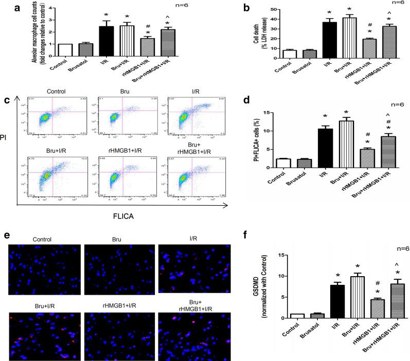 rHMGB1 preconditioning inhibits AM pyroptosis via the Keap1/Nrf2/HO-1 pathway in LIRI. a Isolated AM counts in BALF. b LDH release from isolated AMs in BALF. c Representative results of flow cytometry assessing macrophage pyroptosis: F4/80 + cells were gated and analyzed for fluorescently labeled active caspase (FLICA) and propidium iodide (PI). d Quantitative analysis of F4/80 + FLICA + PI + cells. e Representative immunolabelling images for GSDMD protein from isolated AMs in BALF. f GSDMD levels in isolated AMs. (*p