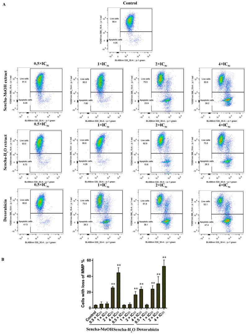 Representative images of JC-1 fluorescence with flow cytometry and statistical analysis of mitochondrial membrane potential on CCRF/CEM cells. ( A ) Cells were treated with DMSO as control and 0.5-, 1-, 2-, and 4-fold IC 50 of sencha-MeOH/H 2 O extract and doxorubicin respectively for 24 h. ( B ) Statistical results of the apoptotic cell were defined as MMP collapse after 24 h treatment. IC 50 values were 8.38 μg/mL for sencha-MeOH extract, 11.50 μg/mL for sencha-H 2 O extract, and 0.0093 μM for doxorubicin towards CCRF/CEM cells. Asterisks above bars denote p -values for one-way ANOVA analysis: ** p