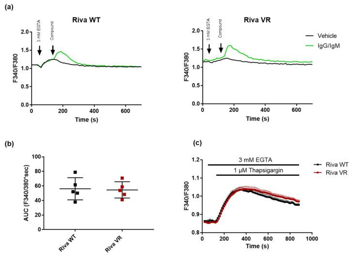 Cytosolic IgG/IgM Ca 2+ responses and ER Ca 2+ content do not differ between Riva WT and Riva VR. ( a ) Typical cytosolic Ca 2+ traces in Fura-2-AM-loaded Riva WT and VR. Sixty seconds after the chelation of extracellular Ca 2+ with EGTA (3 mM), the cells were stimulated with vehicle or 12 μg/mL IgG/IgM to provoke a cytosolic Ca 2+ signal. ( b ) Analysis of the area under the curve (AUC) of the IgG/IgM-triggered peak. Data are presented as average ± SEM (N = 5). ( c ) Cytosolic Ca 2+ traces in Fura-2-AM-loaded Riva WT (black) and VR (red). Sixty seconds after the chelation of extracellular Ca 2+ with EGTA (3 mM), the cells were treated with thapsigargin (1 μM) to deplete ER Ca 2+ stores. Data are presented as average ± SEM (N = 6).