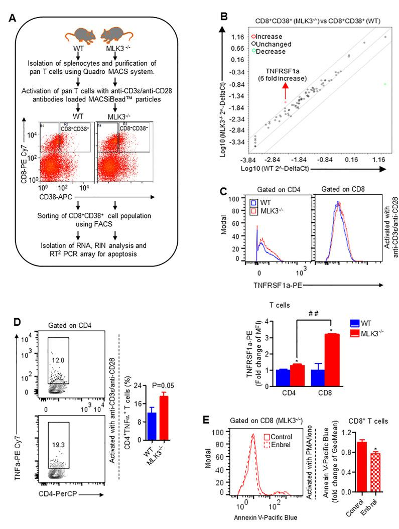 Loss of MLK3 induces TNFα-TNFRSF1a axis-mediated apoptosis in CD8 + T cells. (A) Experimental approach for RT 2 PCR array for apoptosis-associated genes. (B) RT 2 PCR array for apoptosis-associated genes in purified CD8 + CD38 + T cells derived from WT and MLK3 −/− mice (pooled, n=3 mice/group). (C) Representative histogram plots (upper panel) and quantification (lower panel) of TNFRSF1a surface expression, gated on CD4 + and CD8 + T cells, respectively. Values are the mean±SD, *p