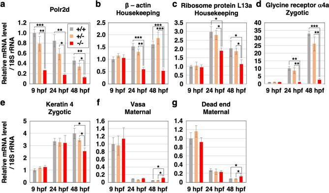 The mRNA levels are affected in polr2d mutants. Expression of several genes relative to 18S rRNA level in wild-type (+/+), heterozygous mutant (+/−) and homozygous mutant (−/−) embryos. The Polr2d gene ( polr2d : a ). Housekeeping genes: β-actin ( actb1 : b ) and ribosome protein L13a ( rpl13a : c ). Zygotic genes: glycine receptor α4a subunit ( glra4a : d ) and keratin 4 ( krt4 : e ). Maternal genes: DEAD-box RNA helicase vasa ( vasa : f ) and RNA-binding protein dead end ( dnd : g ). Note that mRNA levels of housekeeping and zygotic genes but not maternal genes were reduced in mutants at 24 and 48 hpf. n = 5 for each sample set.