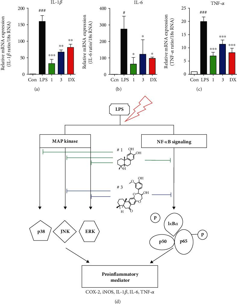 Compounds 1 and 3 downregulated proinflammatory mediators. (a–c) The mRNA expression levels of IL-1 β , IL-6, and TNF- α were measured using quantitative real-time PCR experiment, and these proinflammatory cytokines were significantly diminished by compounds 1 and 3 . Cells were preincubated for 2 h with compounds 1 and 3 at concentration of 5 and 10 μ M, respectively, and activated by LPS (1 μ g/mL) for 2 h. Results represent as mean ± SEM, and dexamethasone was used as a positive control. # p