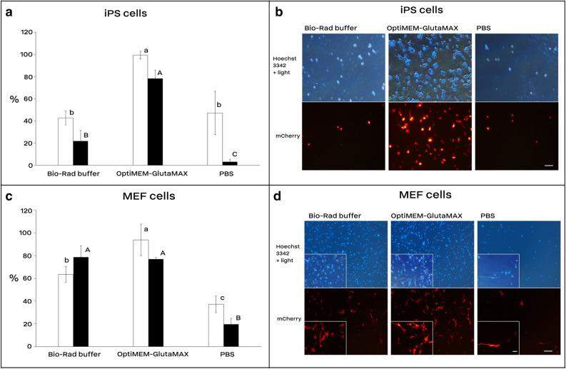 Cell electrotransfection and viability rates using Bio-Rad buffer, OptiMEM-GlutaMAX, and <t>PBS.</t> Electrotransfection efficiency of mouse <t>iPS</t> ( a and b ) and MEF cells ( c and d ). In each electroporation reaction, 20 µg (1.5–2.5 µg/µl) of the reporter plasmid (encoding mCherry) was pre-mixed with cells and underwent electroporation using the square-wave protocol consisted of 250 V for iPS and 300 V for MEF cells, 2 pulses, each 10 ms length, 10 s interval, and 4 mm cuvette. The reporter expression was assessed 36 h after electroporation under a fluorescence microscope. White and black bars are electrotransfection efficiency and cell viability, respectively. Bars with different A, B, C or a, b, c letters are significantly different ( p value