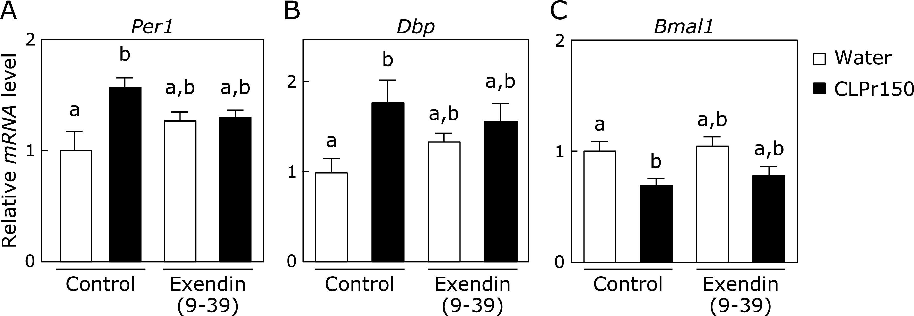 The effect of CLPr administration on the expression level of clock genes in the liver after pretreatment with GLP-1 receptor antagonist. Mice were orally administered CLPr at 150 mg/kg body weight or water (5.0 ml/kg body weight) at ZT3. Exendin (9-39), a GLP-1 receptor antagonist, was pre-injected to the mice at 200 nmol/kg body weight 5 min before the CLPr administration. The liver was collected 3 h after the CLPr administration and the expression of Per1 (A), Dbp (B) and Bmal1 (C) was measured by RT-PCR. After the expression level of mRNA was normalized by that of gapdh , the relative expression level was shown. Data are represented as the means ± SE ( n = 5). Different letters indicate significant differences ( p