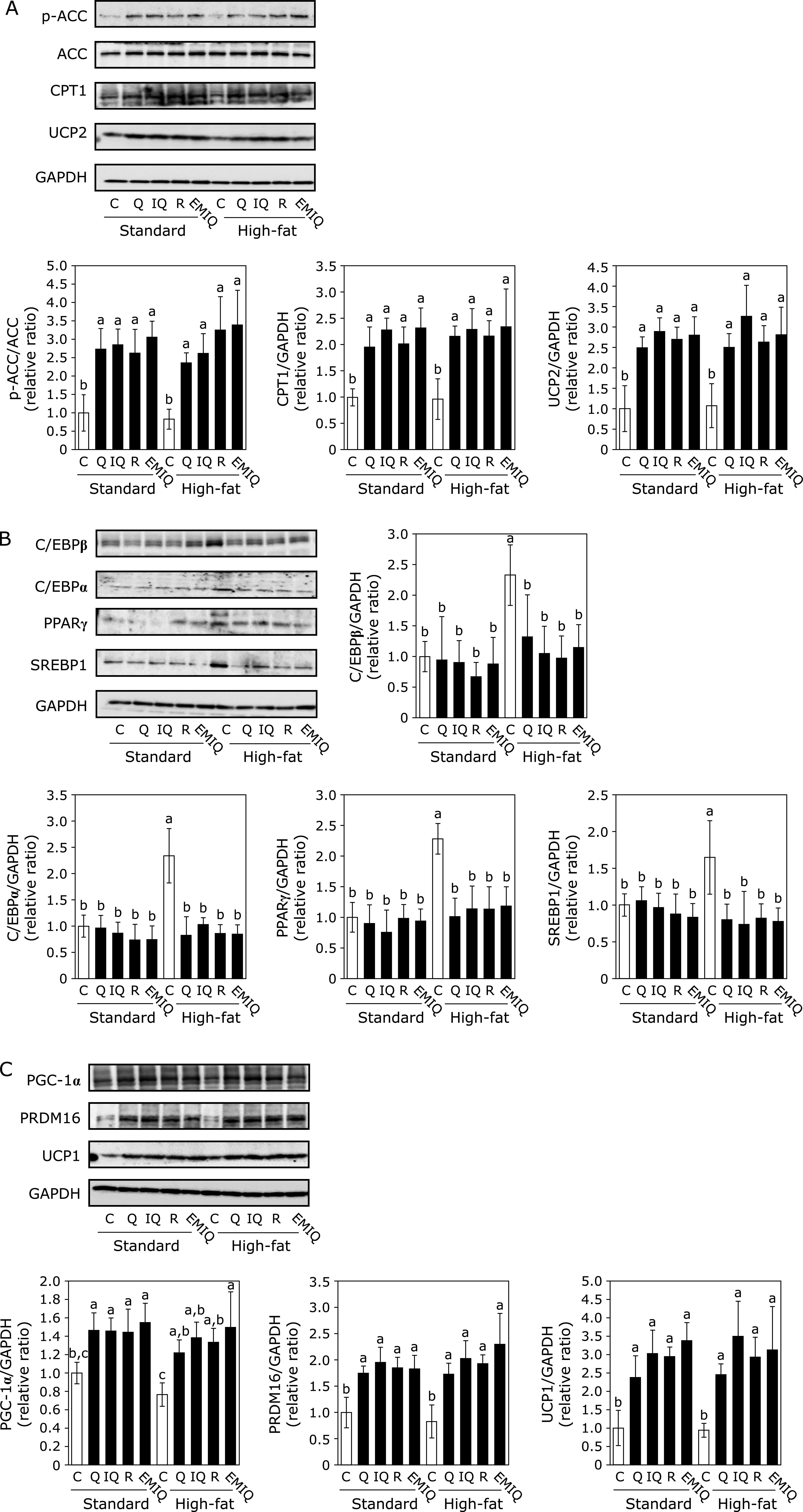 Effect of quercetin (Q), isoquercitrin (IQ), rutin (R), and EMIQ on the expression of adiposity-related proteins in WAT. The expression of (A) p-ACC, ACC, CPT1, UCP2, and GAPDH in the tissue lysate of WAT, the expression of (B) C/EBPβ, C/EBPα, PPARγ, SREBP1 and GAPDH in tissue lysate of WAT and the expression of (C) PGC-1α, PRDM16, UCP1,and GAPDH in tissue lysate of WAT were determined by Western blot analysis. Each panel shows a typical blot from five animals. The normalized density of specific protein band shown in the bar graphs. Values were shown as the mean ± SE ( n = 5). Different letters indicate significant differences among the groups by Tukey-Kramer multiple comparison test ( p