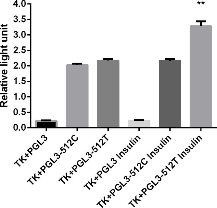 Effect of insulin on FOXC2 promoters. Insulin significantly increase the FOXC2-pro-512T promoter activity. **P