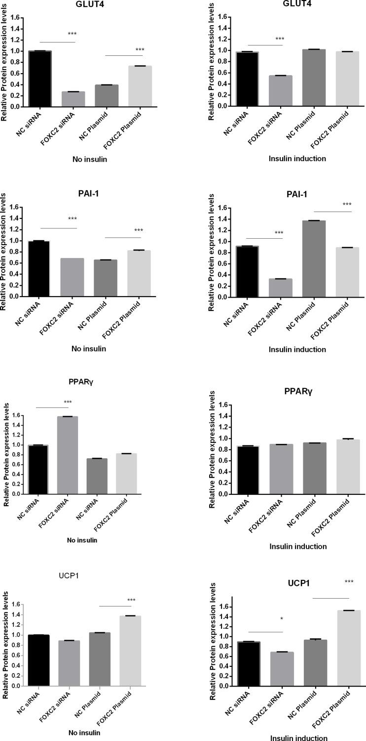 Expression of IR-related genes under different FOXC2 expression condition, with or without insulin induction. ***P
