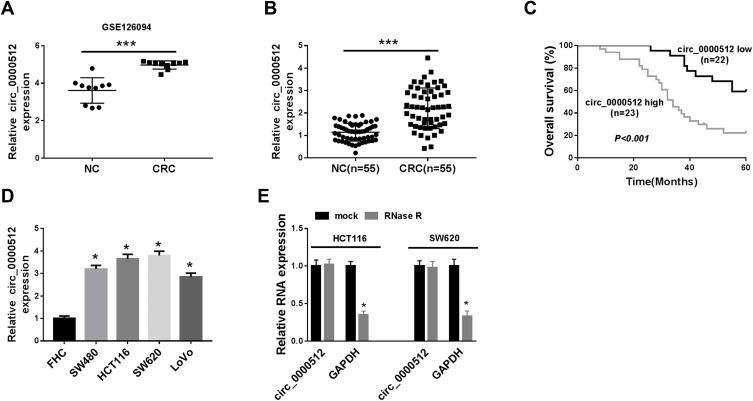 The expression of circ_0000512 was enhanced in CRC tissues and cells, and correlated with poor clinical outcomes. ( A ) GSE126094 (10 pairs of CRC tissues and normal tissues) from the GEO database was analyzed to determine the expression of circ_0000512 in CRC tissues and normal tissues. ( B ) The expression of circ_0000512 was detected by qRT-PCR in CRC tissues and normal tissues. ( C ) The overall survival rate was measured between low and high circ_0000512 expression groups in CRC patients by Kaplan-Meier survival analysis. ( D ) The level of circ_0000512 was analyzed by qRT-PCR in CRC cells (SW480, HCT116, SW620, LoVo) and FHC cells. ( E ) The relative levels circ_0000512 and GAPDH were determined after treatment of RNase R by qRT-PCR. * P