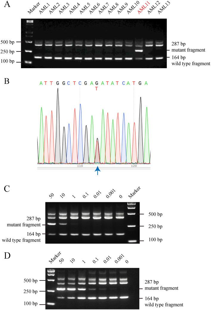 Validation of the RFN-AS-PCR method by using mixtures of DNA samples from FLT3D835Y mutant and wild type AML blood samples. a Screening of 13 AML blood samples by using RFN-AS-PCR identified AML11 as a FLT3D835Y-positive case. b Verification of FLT3D835Y positivity in AML11 by Sanger sequencing. c and d Blood cell DNAs from AML11 and a patient with wild type FLT3 were mixed in the indicated proportions. AS-PCR was performed without EcoRV digestion (panel c ) or with EcoRV digestion (panel d ). Note that the EcoRV digestion increased the detection sensitivity from 1 to 0.001%