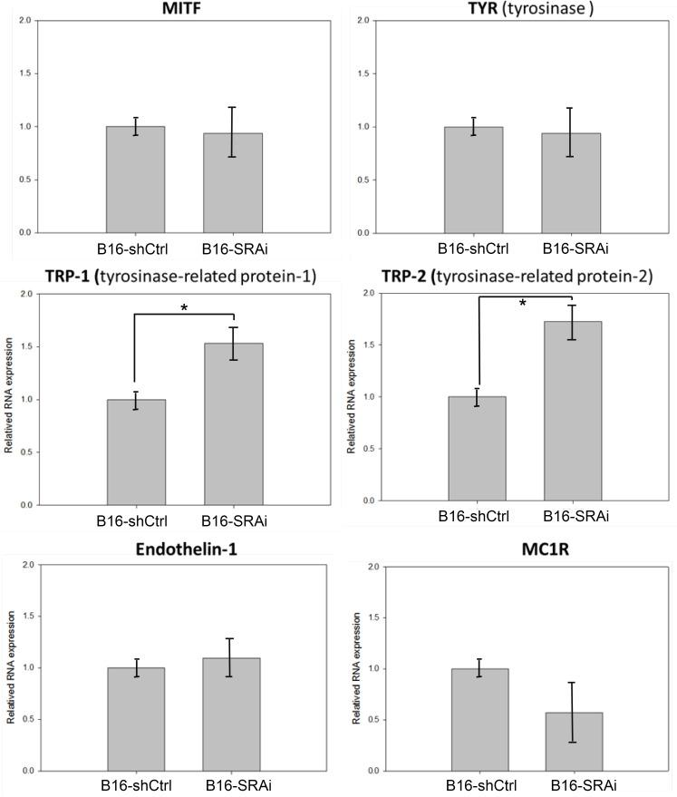 Increased TRP1 and TRP2 expressions in SRA-deficient B16 cells. B16-shCtrl and B16-SRAi cells were processed for <t>RNA</t> extraction, <t>cDNA</t> synthesis, and real-time PCR for the measurement of MITF, TYR, TRP1, TRP2, endothelin-1, and MC1R (n = 3 and 3, respectively; error bars represent standard errors; * indicates p