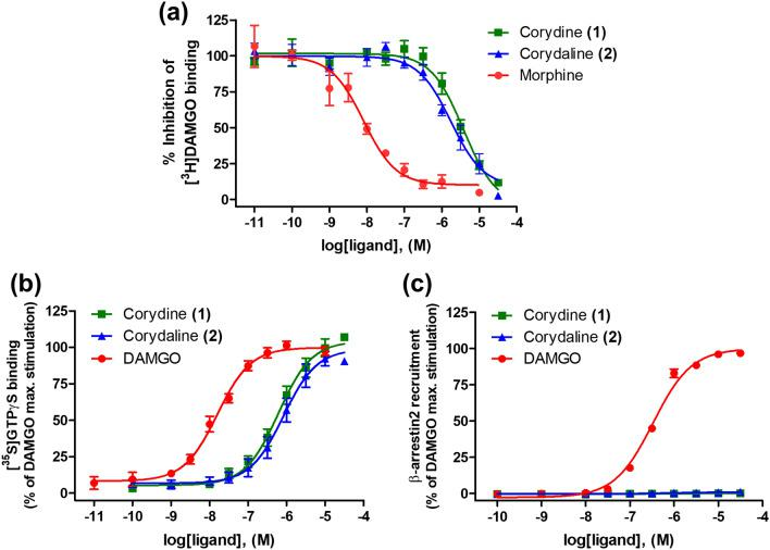 In vitro activity profiles of corydine ( 1 ) and corydaline ( 2 ) to the human MOR. ( a ) Concentration-dependent inhibition of [ 3 H]DAMGO binding to CHO-hMOR cell membranes was determined in the competitive radioligand binding assay. ( b ) Agonist activities of test compounds to the MOR as stimulation of [ 35 S]GTPγS binding were determined in the [ 35 S]GTPγS binding assay with CHO-hMOR cell membranes. ( c ) β-Arrestin2 recruitment activities of test compounds to the MOR were determined in the PathHunter β-arrestin2 assay. Values are means ± SEM (n = 3–4 independent experiments performed in duplicate).