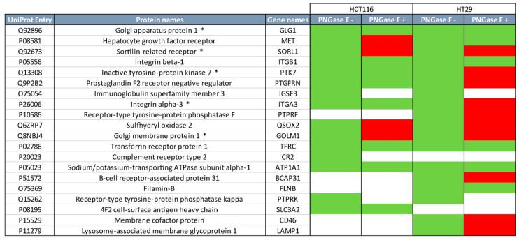 Release of N -glycans reduces the MGL-binding of proteins from CRC cell lines. MGL pull-downs were performed after N -glycan release of the total protein extracts of HCT116 and HT29 cells. Bound proteins were analyzed by SDS-PAGE, trypsin digestion and LC-MS/MS. The top 20 MGL-binding proteins that we previously identified [ 16 ] are shown (in green, PNGase F − (white indicates not identified in that cell line)). After N -glycans release (PNGase F +) MGL binders maintained (green) or lost (red) the ability to bind to MGL. *: proteins with previous [ 16 ] identification of glycopeptides with a LacdiNAc epitope on an N -glycan. See Table S1 for further details.