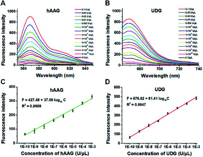 (A) Fluorescence spectra in response to different concentrations of hAAG. (B) Fluorescence spectra in response to different concentrations of UDG. (C) The log–linear correlation between the fluorescence intensity at 568 nm and the concentration of hAAG. (D) The log–linear correlation between the fluorescence intensity at 670 nm and the concentration of UDG. Error bars show the standard deviations of three experiments. The 100 nM bifunctional dsDNA substrates and 2 U of APE1 were used in this research.