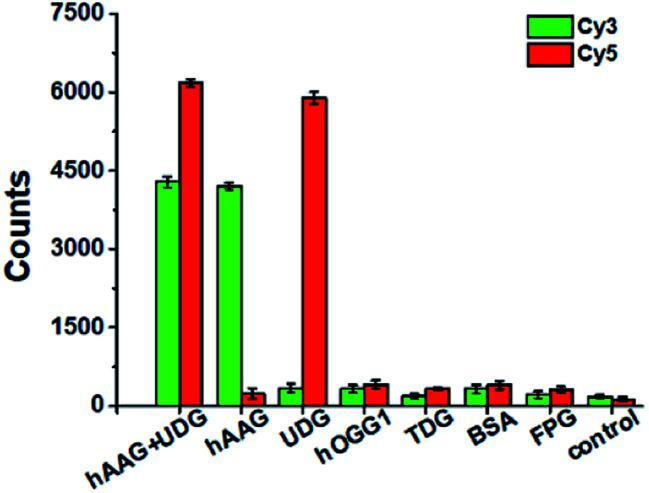 Variance of Cy3 counts (green color) and Cy5 counts (red color) in response to 0.1 U μL –1 hAAG + 0.1 U μL –1 UDG, 0.1 U μL –1 hAAG, 0.1 U μL –1 UDG, 0.1 U μL –1 hOGG1, 0.1 U μL –1 TDG, 0.1 μg μL –1 BSA, 0.2 U μL –1 FPG, and the control group with only reaction buffer, respectively. The 100 nM bifunctional dsDNA substrates and 2 U of APE1 were used in this research. Error bars show the standard deviation of three experiments.