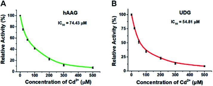 (A) Variance of the relative activity of hAAG in response to different-concentration Cd 2+ . (B) Variance of the relative activity of UDG in response to different-concentration Cd 2+ . The 100 nM bifunctional dsDNA substrates, 2 U of APE1, 0.1 U μL –1 hAAG, and 0.1 U μL –1 UDG were used in this research. Error bars show the standard deviation of three experiments.