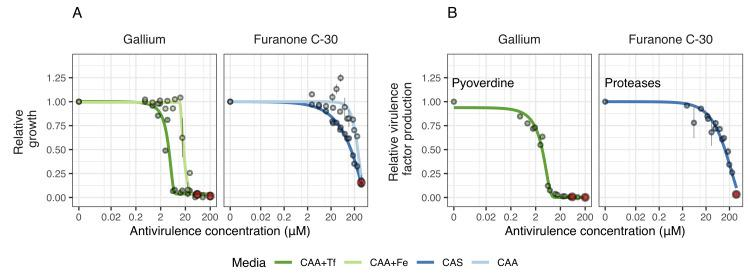 Antivirulence dose response curves for P . aeruginosa PAO1 (growth and virulence factor production). We exposed PAO1 to the antivirulence compounds gallium (inhibiting pyoverdine-mediated iron uptake) and furanone C-30 (blocking QS response, including protease production) both in media in which the targeted virulence factors are expressed and required (iron-limited CAA+Tf medium for gallium and CAS medium for furanone) and in control media, in which the targeted virulence factors are not required (iron-supplemented CAA+Fe medium for gallium and protein digested CAA for furanone). ( A ) Dose-response curves for growth show that both antivirulence compounds reduced bacterial growth, but more so in media in which the targeted virulence factor is expressed. This demonstrates that there is a concentration window where the antivirulence compounds have no toxic effects on bacterial cells and just limit growth due to virulence factor quenching. ( B ) Dose-response curves for virulence factor production show that gallium and furanone C-30 effectively inhibit pyoverdine and protease production, respectively, in a concentration-dependent manner. Dots show means ± standard errors across six replicates. All data are scaled relative to the drug-free treatment. Data stem from two independent experiments using different dilution series. The red dots indicate the highest concentration used for the respective experiments, from which 7 serial dilution steps were tested. Curves were fitted with either log-logistic functions (in CAA+Tf) or with three-parameter Weibull functions (in CAS). The underlying data for this figure can be found at https://doi.org/10.6084/m9.figshare.12515364 . CAA, casamino acid medium; CAS, casein medium; QS, quorum sensing; Tf, human apo-transferrin.