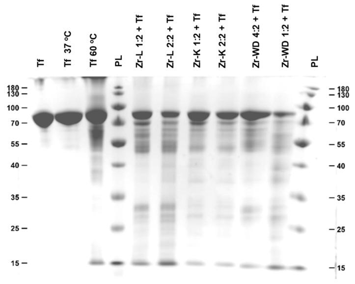 SDS-Page gel featuring intact transferrin (lane 1), transferrin incubated in phosphate buffer (lanes 2–3), and transferrin incubated in buffer solutions containing different metal-substituted POMs (lanes 5–10). The samples in this gel were incubated for 3 days.